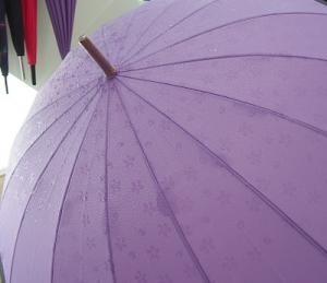 サクラ咲く傘