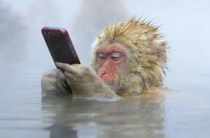 「iPhoneを眺める入浴中のサル