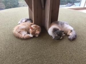 猫カフェMoCHA 原宿店