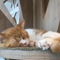 原宿 猫カフェ モカ